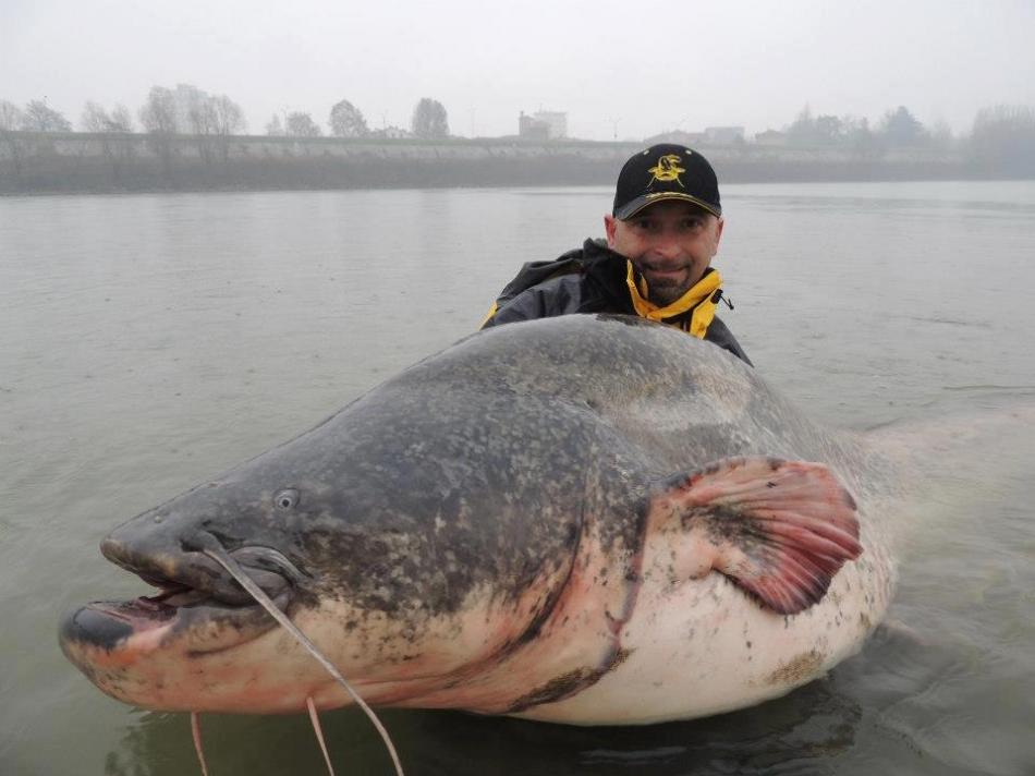 Sumec 260cm 117kg
